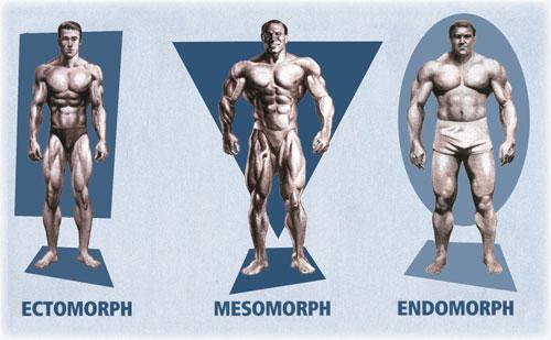 Mesomorfo - Mesotropin
